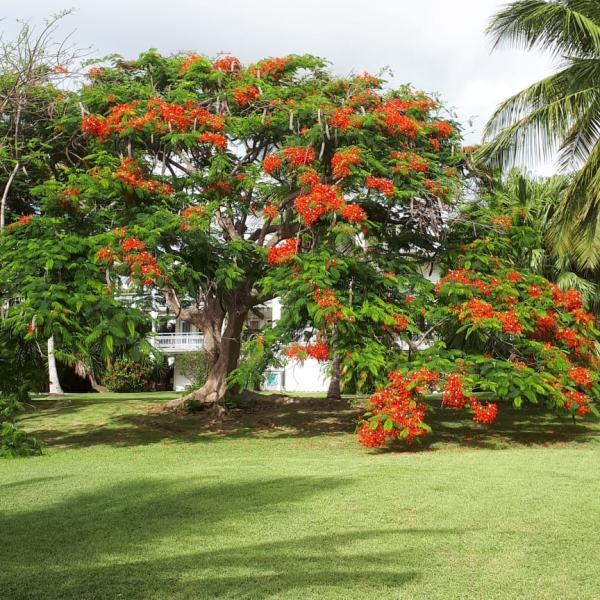 Le parc avec ses flamboyants en fleurs